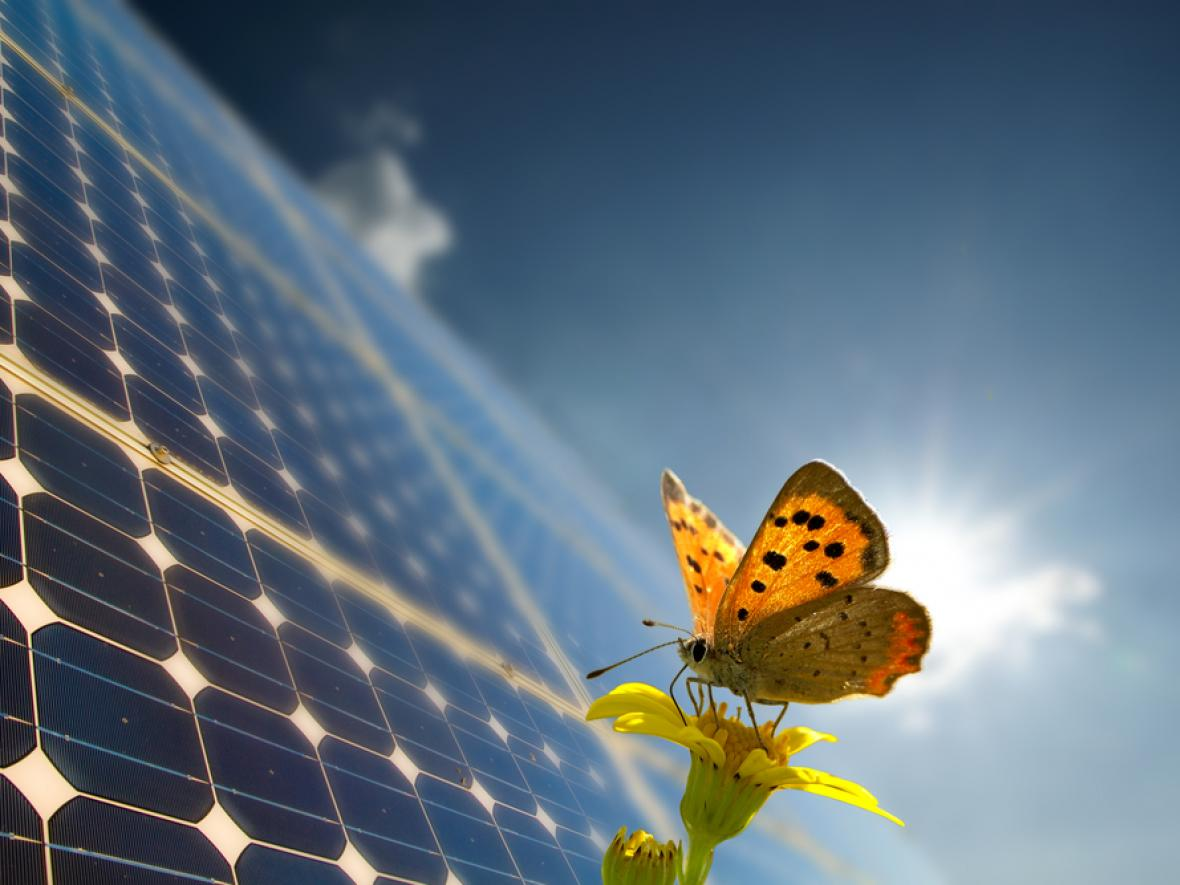 butterfly lands on solar panel with the sun shining