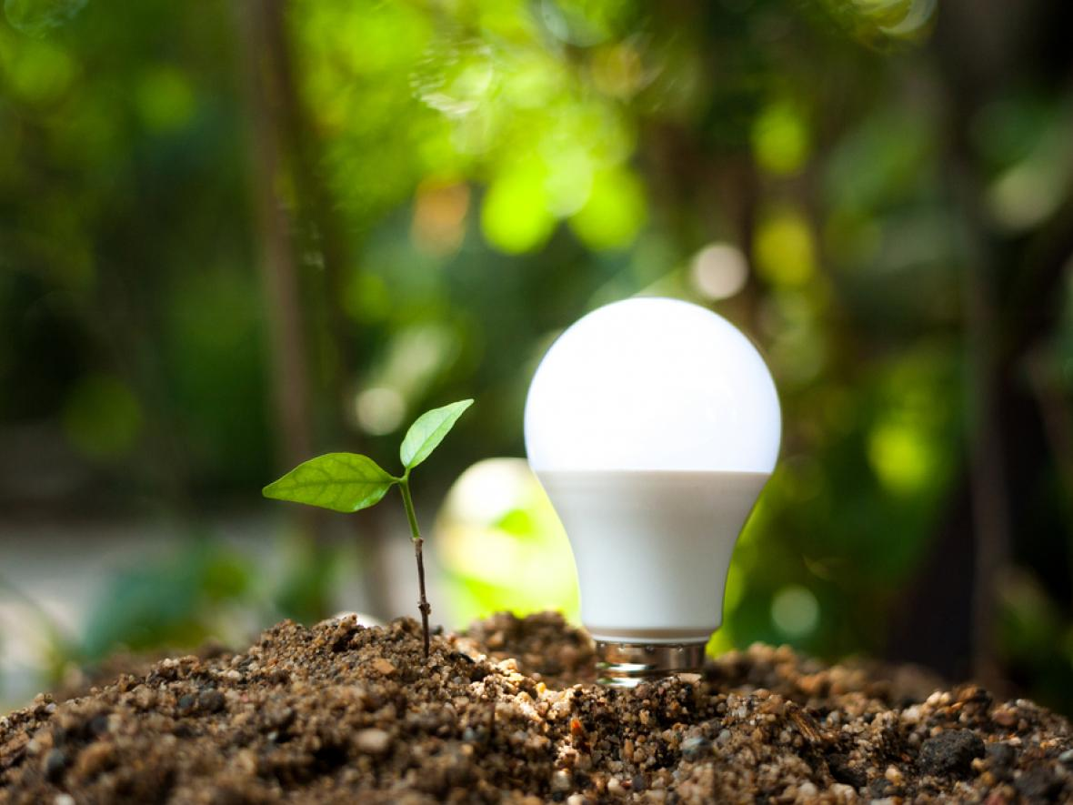 led light bulb in dirt next to green seedling in dirt mound