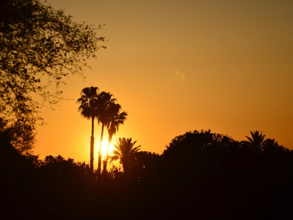 paradise valley sunrise silhouette against palm tree